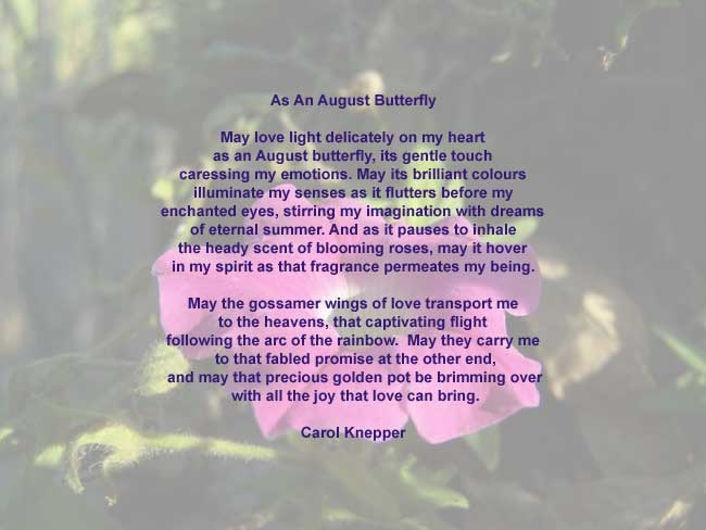 As An August Butterfly, love poem by Carol Knepper, background image ...